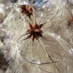 Furry flower