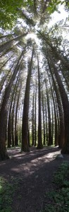 """Redwoods from Floor to Ceiling"""