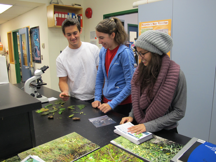 Ecology students studying botanical specimens that they gathered from the field.