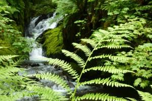 Ferny Falls