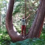 Lee in a Cedar