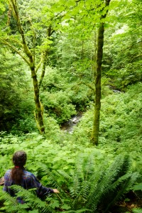 Veiled Creek