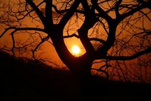 """""""Sun Tree"""""""